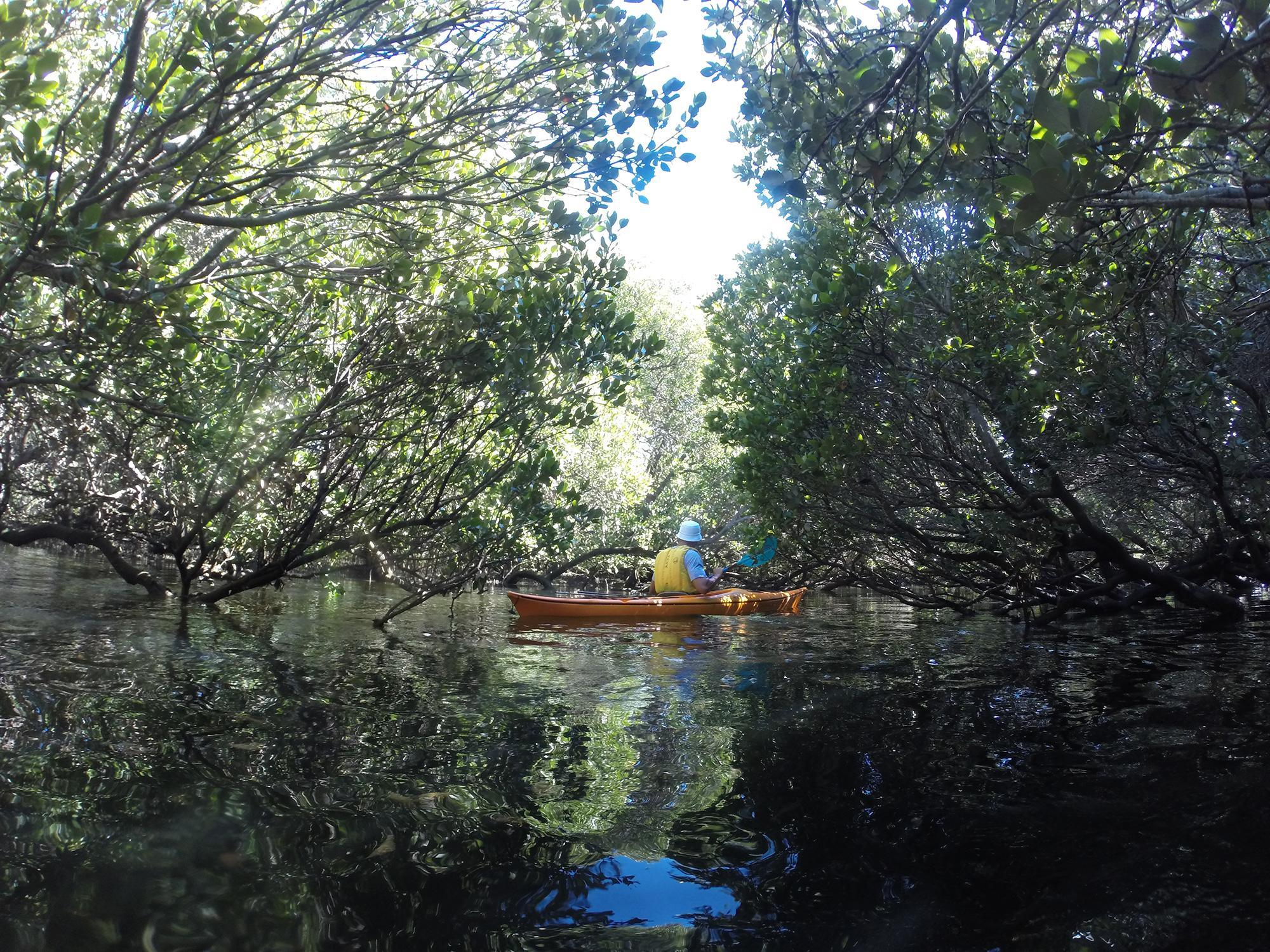 Port River Adelaide kayak mangrove creek