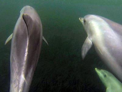 Dolphin Safari Kangaroo Island SA